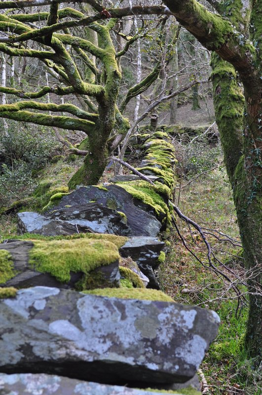 Cae Mabon rocks and trees