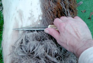 Scraping the hide