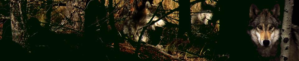 Greywolf's Lair